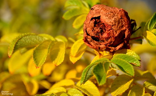 Vergangene Schönheit (Explore vom 19.11.17)