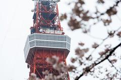 DSC_3450 (維尼賈許) Tags: 2017tokyotrip d610 day7 japan nikon24120mmf4ged tokyotower 增上寺 日本 東京タワー 東京鐵塔 minatoku tōkyōto jp