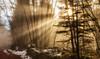 Walk on the wood (Max Todarep) Tags: woods trees light colors leafs sunrays sun foggy misty