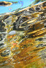 20171103-DSC_1565.jpg (d3_plus) Tags: drive fish marinesports apnea 1030mm zoomlense sea j4 underwater nikon1 景色 魚 ニコン1 skindiving watersports wpn3 風景 sky マリンスポーツ japan nikon 静岡県 空 fishingport westizu nikonwpn3 静岡 水中 ウォータープルーフケース ニコン nikkor 漁港 スキンダイビング nikon1j4 伊豆 2781mm 海 snorkeling port scenery diving 息こらえ潜水 ズーム 西伊豆 1030mmpd 素潜り shizuoka 日本 1nikkorvr1030mmf3556pdzoom waterproofcase シュノーケリング izu