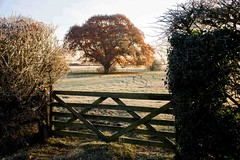 Autumn greets winter (odell_rd) Tags: bletsoe fence autumn winter frost oak 5bargate coth5