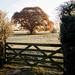 Autumn greets winter (odell_rd) Tags: bletsoe fence autumn winter frost oak 5bargate