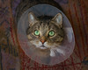 You mean I have to wear this thing for another WEEK ?!! (FocusPocus Photography) Tags: sethi katze kater cat chat gato tier animal haustier pet halskragen cone tabby portrait