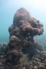 20141018-S2-other photos-134.jpg (UWC Coral Monitoring) Tags: lpcuwc coralmonitoring site2 hoihawan cm hhw lipochununitedworldcollege 海下 海下灣 diadema coraldamaged platygyra seaurchin
