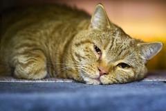 weekend blues (Siggital) Tags: kenny kadse katze kitty weekend blues chilling relax