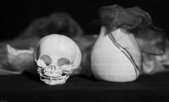 Still life with Fetal skull (N.the.Kudzu) Tags: home tabletop stilllife fetal skull vase scarves bw infrared lightroom canon70d