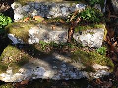 34 (emmess2) Tags: campiglia cinqueterre spezia autumn fall leaves