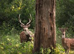 That Look (malhotraXtreme) Tags: nature landscape wide angle lens sony alpha 58 tamron rokinon india bangalore south munnar bandipur