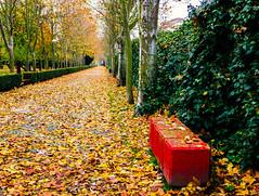 Invasion (Walimai.photo) Tags: hoja leaf otoño autumn fall jesuitas parque park salamanca spain españa lumix lx5 panasonic street calle verde green color colour