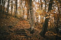 Autumn forest (desomnis) Tags: nature wood woods woodland austria österreich trees autumn bokeh canon5d canon5dmarkiv sigma35mmf14art sigma35mm landscape desomnis