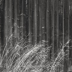 Barn abstract (Stefano Rugolo) Tags: stefanorugolo pentax k5 kepcorautowideanglemc28mm128 monochrome abstract minimal barn grass blackandwhite impression sweden hälsingland sverige texture lines wood
