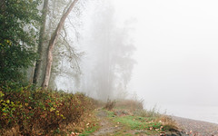 Withdrawal (John Westrock) Tags: nature trees fog foggy path trail washingtonstate pacificnorthwest canoneos5dmarkiii sigma35mmf14dghsmart carnation