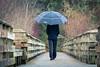 A rainy walk in the fall (Joel Apple) Tags: wood hike boradwalk woods fall langford man vancouverisland forest hiking umbrella colors autum britishcolumbia rain rainyday walk