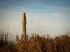 The Samurai (HFF) (13skies) Tags: samurai post hff happyfencefriday fencepost orange lonely alone grasses earlymorning lightroom sunlight bluesky