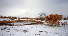 On a snowy morning... (TrondSphoto) Tags: september snow fall colors dørålen rondanenationalpark mountains foliage water pond fog trondsphoto canon