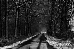 hohle Gasse (grafenhans) Tags: sony alpha 68 a68 alpha68 black white schwarz weiss weg gasse waldweg wald grafenwald bottrop nrw winter schnee tamron 2590