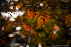 2016 11 26 - 150843 0 Canon EOS 5D Mark III (ONLINED1782A) Tags: depth field silence outdoor plant plants shadow light cross autumn fallen leaves foliage leaf canon eos 5dmark3 ef135mmf2lusm