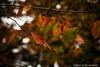 2016 11 26 - 150843 0 Canon EOS 5D Mark III (ONLINED1782A) Tags: depth field silence outdoor plant plants shadow light cross autumn fallen leaves foliage leaf canon eos 5dmark3 ef135mmf2lusm