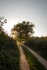 Suivre son chemin (S@ndrine Néel) Tags: chemin backlit loire tree arbre néelsandrine