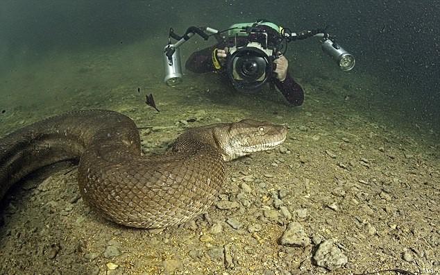 Nói đến trăn Anaconda ai cũng sợ nhưng ẩn sau bức hình này là sự thật mà ai nghe cũng dựng tóc gáy - Ảnh 2.