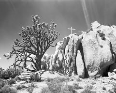 Mojave Cross (magnetic_red) Tags: cross mojavenationalpreserve blackandwhite shotonfilm joshuatree largeformat crowngraphic caffenol rayoflight contrast boulders rocks desert sky redfilter