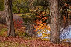 WM KOA Park_0264 (smack53) Tags: smack53 foliage fall fallcolors autumn autumnseason autumncolors leaves colorful colors outside outdoors westmilford newjersey nikon d100 nikond100