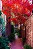 Beacon Hill Last Fall ((Jessica)) Tags: beaconhill autumn boston massachusetts newengland symmetry fall tree vanishingpoint trees foliage street willowcourt