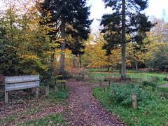 Alice Holt Arboretum (Marc Sayce) Tags: arboretum trees colours fall leaves lodge autumn november 2017 alice holt forest hampshire farnham surrey south downs national park