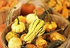 Oh my gourd.... (nushuz) Tags: pumpkins ohmygourd gourds thanksgivingiscoming chapinsorchard vermont colorful dof