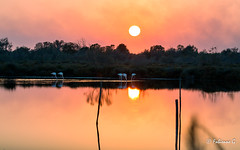 Coucher de Soleil en Camargue (Fabienne G) Tags: camargue canon soleil sunlight sunset sunshine nature wildlife wildphotography animals birds eos5d