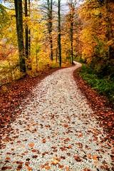 Adelante!! (Susana M.L.) Tags: madera árbol bosque senda suelo naturaleza aire libre selva de irati