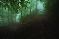Lost in the Fog (Hector Prada) Tags: bosque niebla otoño camino hojas atmósfera herradura naturaleza oscuro forest fog autumn path leaves mood dark nature horseshoe enchanted creepy paísvasco basquecountry