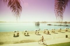 (aismist) Tags: rolleicr200 pentaxsv cokin670 missionbeach sandiego film analog beach cokin084 diffuser soft pastel cruiser sunbathing palmleaves rokinon28mmf28