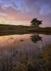 The Curved Tree (Captain Nikon) Tags: kellyhalltarn lakedistrictnationalpark landscapephotographer landscapephotography nationalpark lakedistrict cumbria northwest england greatbritain curves curving reflections lonesometree lonetree silhouette grasses lake tarn tranquility dawn sunrise torver
