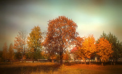 Gold autumn. (augustynbatko) Tags: trees leaves nature autumn landscape sky clouds