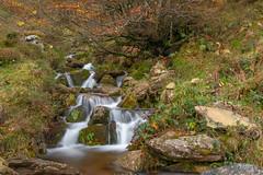PALOMBERA (faustoreinosa) Tags: arboles palombera cantabria efectoseda agua otoño saja