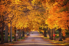 Tree Lined Road (Jonathan Tasler) Tags: tree road kansascity bicycle autumn fall colors