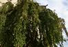 Pražský hrad, Zahrada Na valech - DSC_3447p (Milan Tvrdý) Tags: prague praha praguecastle pražskýhrad hradčany czechrepublic zahradanavalech gardenontheramparts