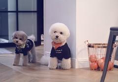 Kim&七七 (k07doll) Tags: blythe blythecustom blythedoll bigeyes sweet doll customblythe custom cubby cute k07 k07doll
