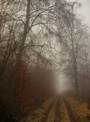 Misty autumn day (catha.li) Tags: lgg4 lg swe sweden skåne forest forestimages naturewatcher soe nature