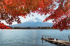 紅楓富士山|Fujisan (里卡豆) Tags: olympus penf 17mm f12 pro olympus17mmf12pro 日本 關東 japan kanto 東京 河口湖 山梨縣