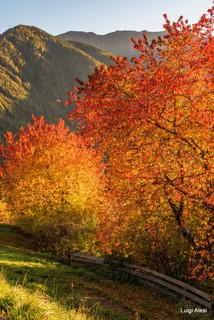 Dolomiti - Val di Funes - il colore dei ciliegi al tramonto