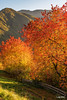 Dolomiti - Val di Funes - il colore dei ciliegi al tramonto (Luigi Alesi) Tags: dolomiti valdifunes funes italia italy alto adige sudtirol val di villnoess bolzano bozen dolomites dolomiten autunno autumn fall paesaggio landscape scenery natura nature alberi trees colori colors nikon d750 raw