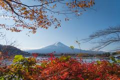 Autumn season with Fujisan (Naponphoto) Tags: fuji fujiyama kawaguchiko japan japantrip travel autumn volcano