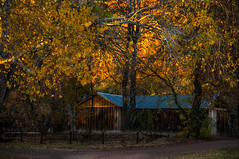 Fall in Sedona ... (max tuta noronha) Tags: fall outing sedona redrock yellow yellowleaves house barn road red autumn fence