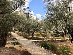 4 - Getszemáni kert / Getsemanská záhrada