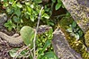 Am Weinberg (w.bredel) Tags: nature weinberg natur echse eidechse