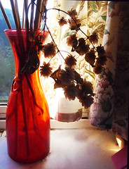 Red Vase and Hops (Durley Beachbum) Tags: 117picturesin201757 glass stilllife vase hops home bournemouth november