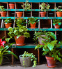 Plants for sale (chrisk8800) Tags: shop sales shelves flowerpot barcelona lines squares geometric structure