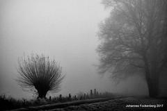 Nebel (grafenhans) Tags: sony rx100 rx 100 carl zeiss cz carlzeiss schwarz weiss black white nebel baum grafenwald bottrop nrw natur winter
